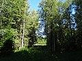 Permskiy r-n, Permskiy kray, Russia - panoramio (1159).jpg