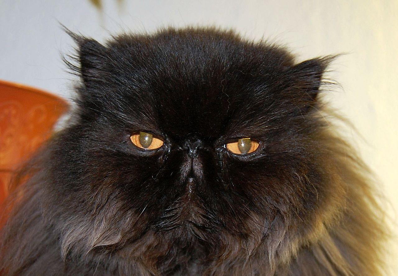 Funny Cat Fur Patterns