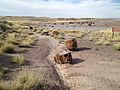 Petrified Forest (30748536974).jpg