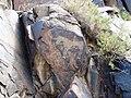 Petroglyph, Tamgaly - panoramio.jpg