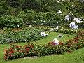 Pfaueninsel - Rosengarten (Peacock Island - Rose Garden) - geo.hlipp.de - 26260.jpg
