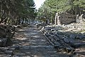 Phaselis march 2012 5308.jpg