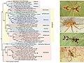 Pholcidae (10.3897-zookeys.789.22781) Figure 9.jpg