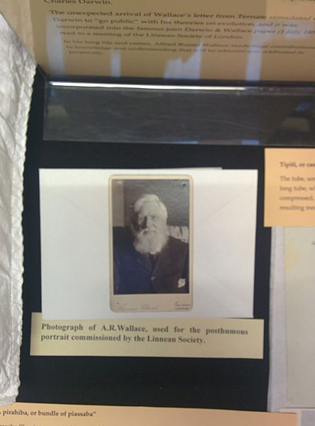 File:Photograph of Alfred Russel Wallace at the Linnean Society of London.jpg