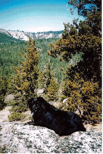 Granite Chief Wilderness - Picayune Valley, Granite Chief Wilderness California USA