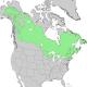 Picea mariana range map.png