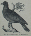 Picture Natural History - No 177 - The Cushat or Ringdove.png