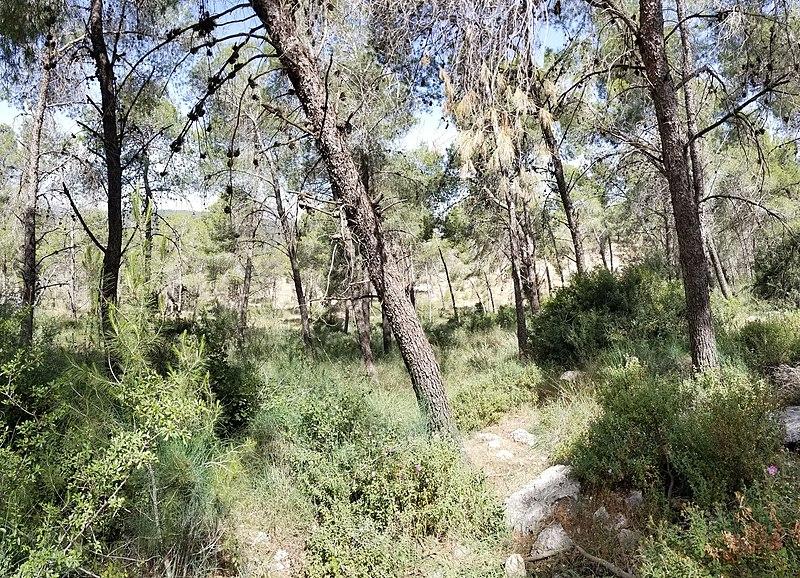 ניהול היער ביער הקדושים ישראל