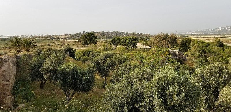 גסר א-זרקא ישראל