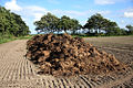 Pile of manure on a field.jpg