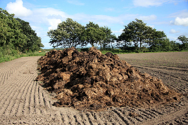 File:Pile of manure on a field.jpg