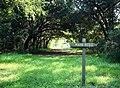 Pinckney Island Trails (7638332376).jpg