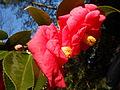 Pink Blossom-2.JPG