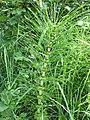 Plant, Shean - geograph.org.uk - 835962.jpg
