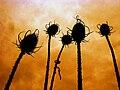 Plants Sky.jpg