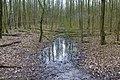 Plas water met bladeren en kale bomen in het mallebos.jpg