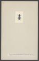 Platycerus - Print - Iconographia Zoologica - Special Collections University of Amsterdam - UBAINV0274 001 04 0008.tif
