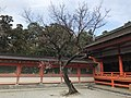 Plum tree in front of Honden of Kashii Shrine.jpg