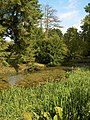 Pond at Chantmarle Manor - geograph.org.uk - 328848.jpg