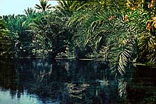 Pond at Qatif Nestor sander 1950s.jpg