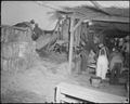 Poston, Arizona. Adobe factory. Mixing mud and straw in a concrete mixer. - NARA - 536676.tif