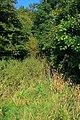 Public Footpath Near Trenholme Farm - geograph.org.uk - 1481355.jpg
