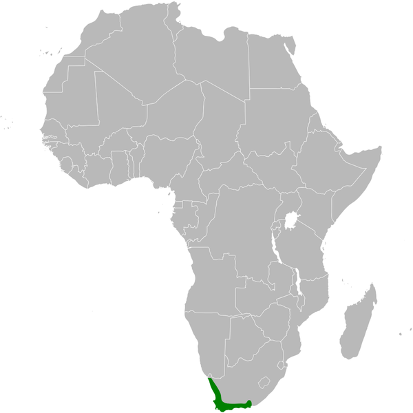 Archivopycnonotus capensis distribution mapg wikipedia la archivopycnonotus capensis distribution mapg gumiabroncs Image collections