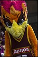 Queensland Netball Firebirds parade day-25 (19260013245).jpg