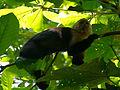 Quepos, Costa Rica (14279311466).jpg