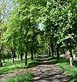 Radweg mit Kastanienblüten - panoramio.jpg