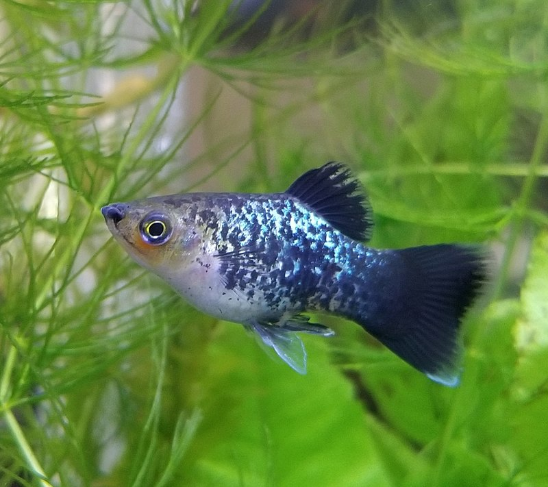 7 Different Types of Fish That Make Great Pets 1