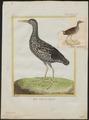 Rallus maculatus - 1700-1880 - Print - Iconographia Zoologica - Special Collections University of Amsterdam - UBA01 IZ17500021.tif