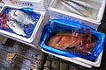 Rare Fish (2678125109).jpg
