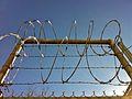 Razor wire.jpg