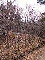 Rebollar en invierno1.jpg