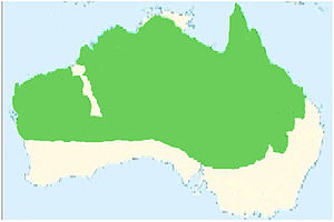 Red-browed pardalote - Red-browed pardalote (Pardalotus rubricatus) distribution map (green area)