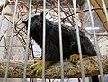 Red-handed tamarin in Japan Monkey Centre.jpg