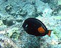Reef0689 - Flickr - NOAA Photo Library.jpg