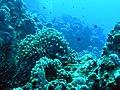 Reef - panoramio.jpg