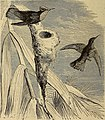 Reptiles and birds. A popular account of the various orders; with a description of the habits and economy of the most interesting. (1873) (14769563873).jpg