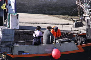 Retour de la pêche à la seiche du fileyeur Jason IV (17).JPG