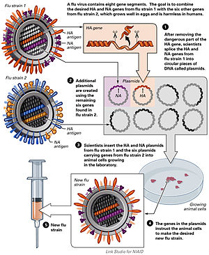 Avian flu vaccine development by Reverse Genet...