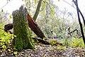 Rezerwat przyrody Morysin, park, Kanał Sobieskiego, Wilanów, Warszawa.jpg
