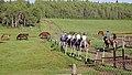 Riding Mountain National Park, Onanole - panoramio (1).jpg