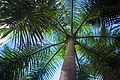 Rio de Janeiro Palm Tree.jpg