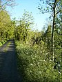 Riverside path along the Loch Allen Canal - geograph.org.uk - 381404.jpg