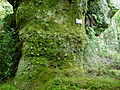 Roche de l'Ours-Autrey (2).jpg