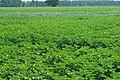 Rohwer Field Day (46438554745).jpg