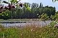 Rokyni Lutskyi Volynska-Kraievyd nature reserve-northeastern shore of the lake-2.jpg