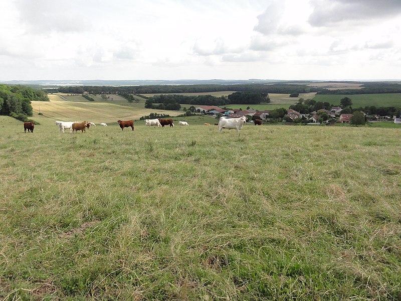 Romain (M-et-M) vue du village